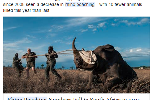 Customer Advocacy: Lessons Learned from the Rhino Anti-Poaching Effort